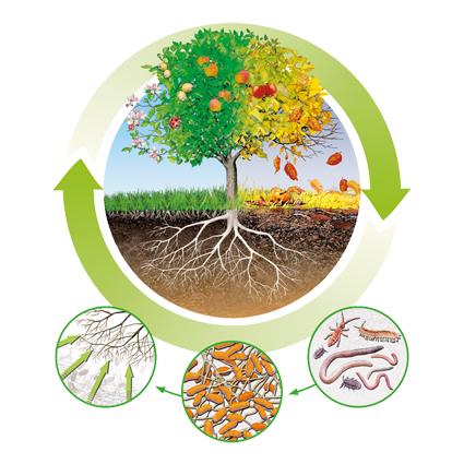 kisspng fertilisers humus nutrient circular economy organi balkon 5b29f8cc1302f9.6140181815294773240779 copia